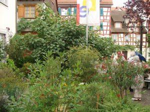 Im Hinterhof der Bibelgalerie ist auch ein kleiner Bibelgarten mit diversen biblischen Pflanzen zu bewundern. Das Wetter lud leider nicht zum längeren Verweilen ein...