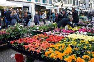 Frühling auf dem Marktplatz.