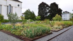 Nutzpflanzen, Gräser, Gewürze, Wasserpflanzen
