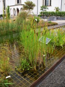 Wasserpfflanzen